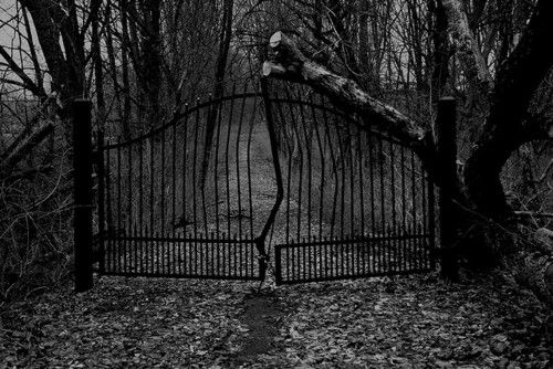 Best images about the creepy outdoors on pinterest