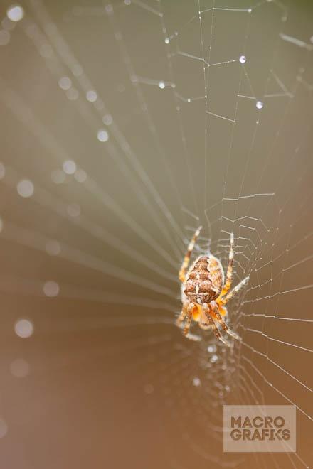 Little spider / © Ada Zyborowicz