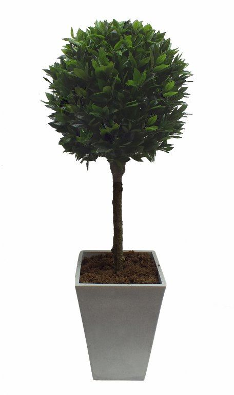 Bay trees are a beautiful solution for framing an entrance. They provide a classic yet contemporary style. Our deluxe bay tree foliage is designed with outdoors in mind and if fully UV stable to make sure they look at their best all year round