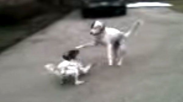 This Puppy Deserves An Oscar For Her Incredibly Smart And Dramatic Performance! OMG, SO FUNNY!