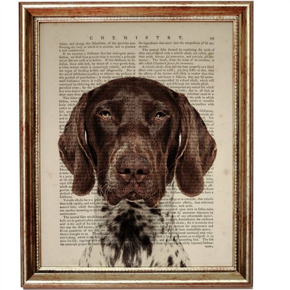 Best Apartment Hunting Sites: German Shorthaired Pointer Dog, Beautiful Art Print On