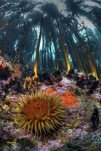 Travelling to South Africa with amazing underwater encounters. Kelp forest, False Bay, South Africa