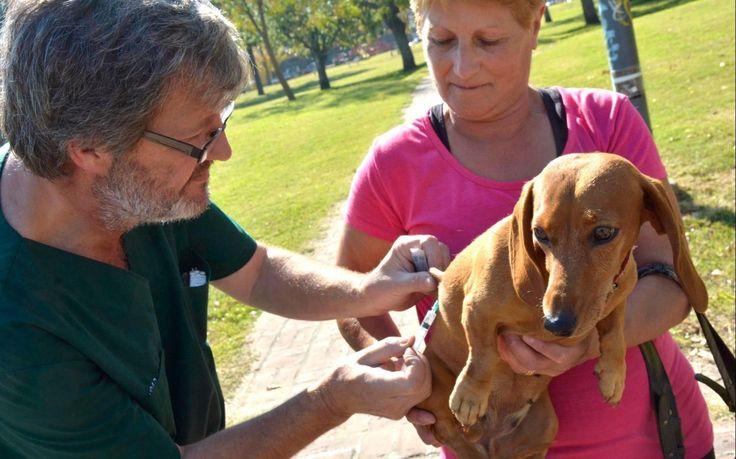 #Nuevas jornadas gratuitas de atención veterinaria, vacunación y desparasitación para mascotas - Diario El Día: Diario El Día Nuevas…