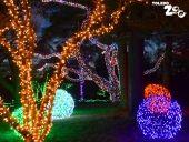 Toledo Zoo Lights before Christmas!!!