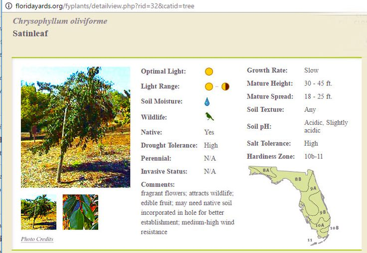 A Native Floridian Tree  #BradentonTreeServices  #SarasotaTreeServices