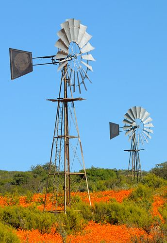 Windmills, South Africa, by Vittorio Ricci
