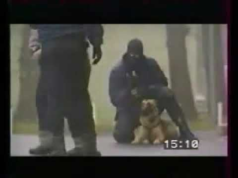 """""""Belgischer Malinois, Schutzhund - Polizeihund""""……..Bruh"""