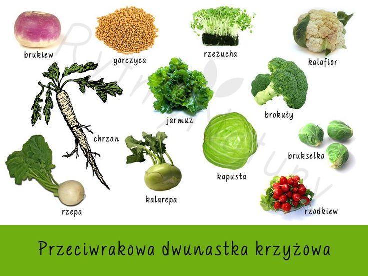 A gdyby tak te najzdrowsze warzywa były remedium na wszelkie nowotworowe historie? No właśnie, w całej naturalnej aptece to właśnie warzywa krzyżowe zwalczają jedną z najstraszliwszych plag na świecie – raka.  #rytmynatury #warzywa #krzyżowe #rak #nowotwór #kapusta #brokuły