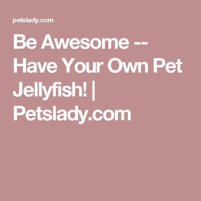 Be Awesome -- Have Your Own Pet Jellyfish! | Petslady.com
