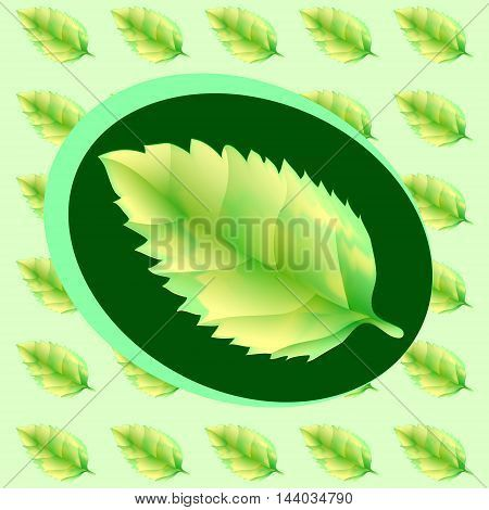 Green leaf of the tree. Leaf linden or apple for background or a logo or a pattern. Grachyhamr