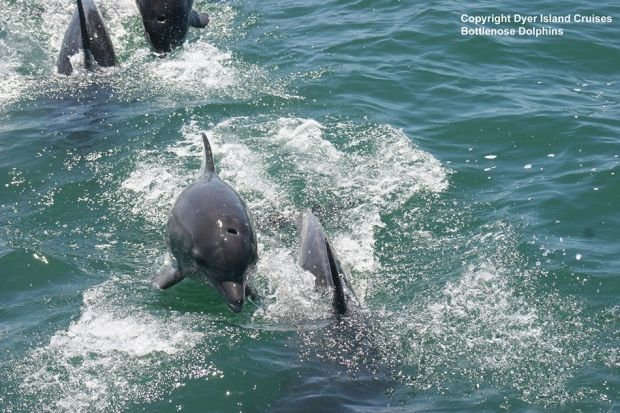 5 Big Reasons We Love The Southern Tip of Africa | Grootbos #MarineBig5 #MarineSafari #Dolphins #Travel http://www.grootbos.com/en/blog/marine-life/five-big-reasons-we-love-the-southern-tip-of-africa