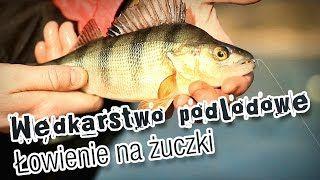 Wędkarstwo podlodowe - łowienie na muchę #wędkarstwo #filmywędkarskie #poradnik https://www.youtube.com/user/CoronaFishing/videos