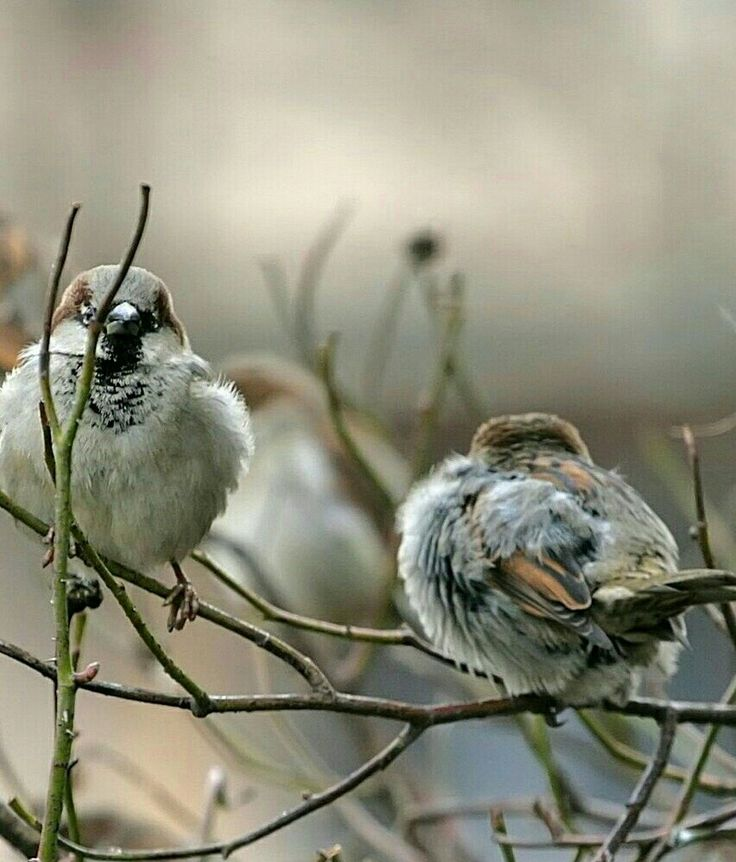 litle birds.