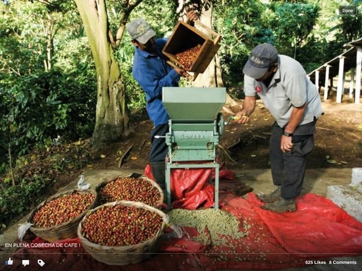 Preparando el cafe ! Grain's coffe fron Honduras (one is the best coffe in the world)