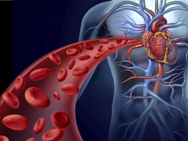Рубрика Здоровье: Как разжижать густую кровь: народные рецепты. Читай последние новости событий на Joinfo.ua