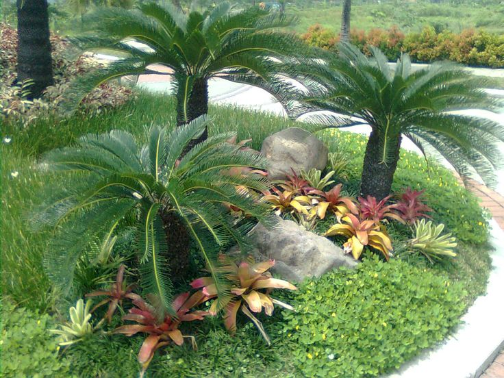 Landscaping With Palms Ideas « Search Results « Landscaping Gallery