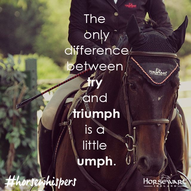 Difference between try & triumph | Horse Quote