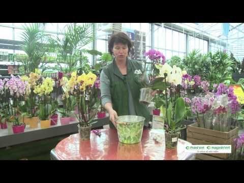 Triskalia - vidéo Magasin Vert/Point vert le Jardin sur l'entretien des orchidées Janvier 2016 - YouTube