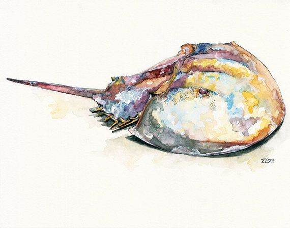 Hey, I found this really awesome Etsy listing at https://www.etsy.com/listing/176640033/horseshoe-crab-print-from-original