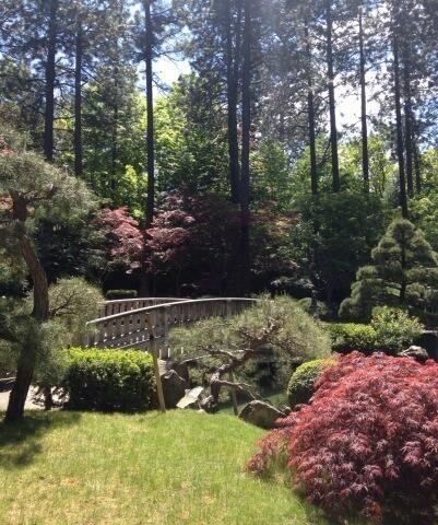 58 best images about near nature near perfect on for Nishinomiya tsutakawa japanese garden koi