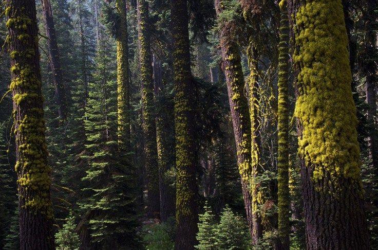Американский Национальный парк Секвойя . Обсуждение на LiveInternet - Российский Сервис Онлайн-Дневников