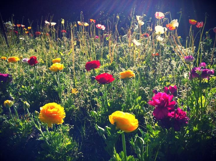Flowers, King Edward Park, Newcastle NSW
