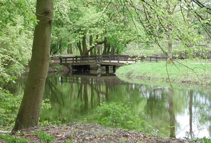 Amsterdamse Bos (Amsterdam Forest)