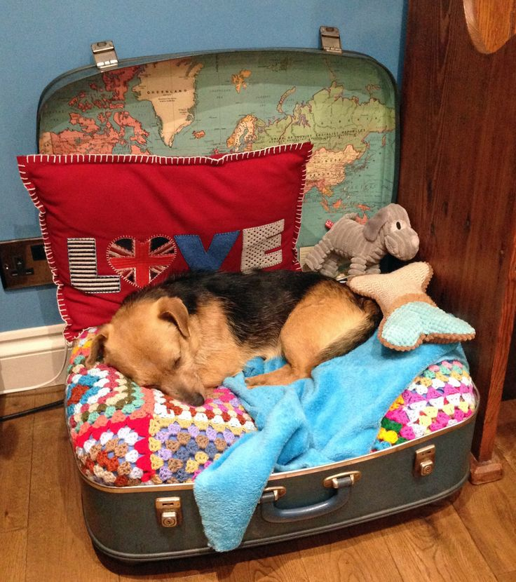 suitcase dog bed
