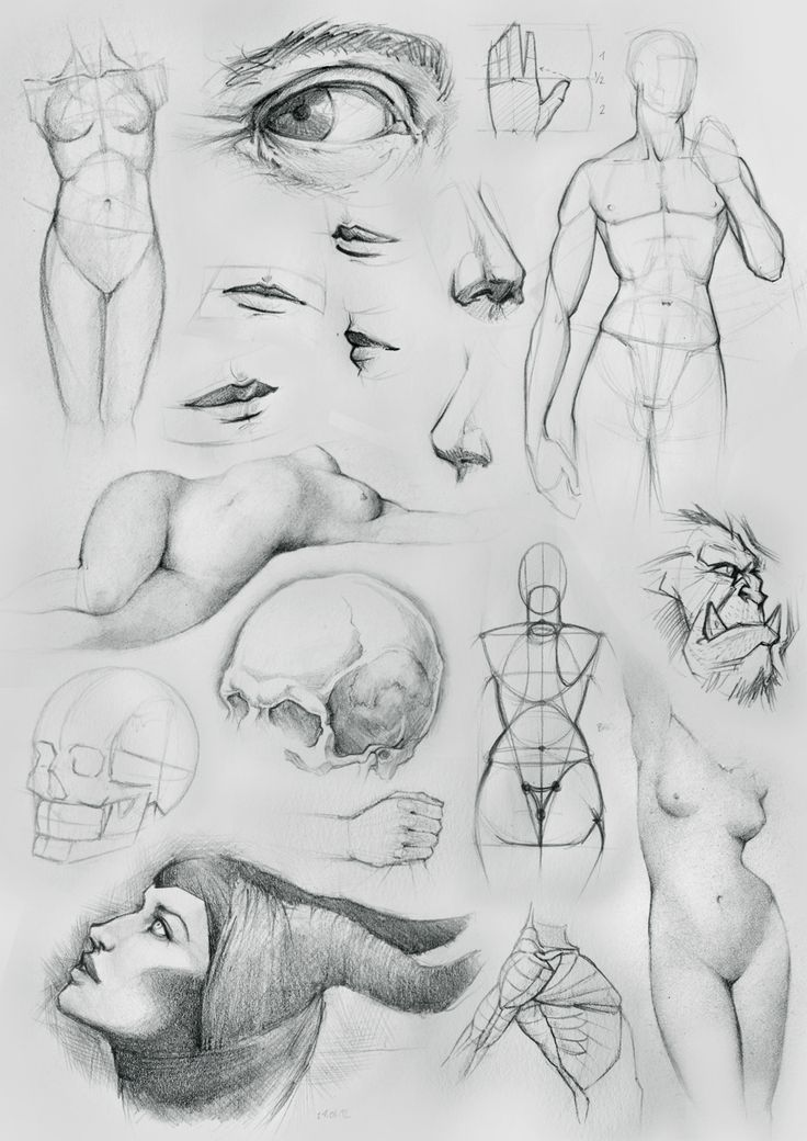 Anatomy Sketches and Other by ~NaamahVonhell on deviantART ...