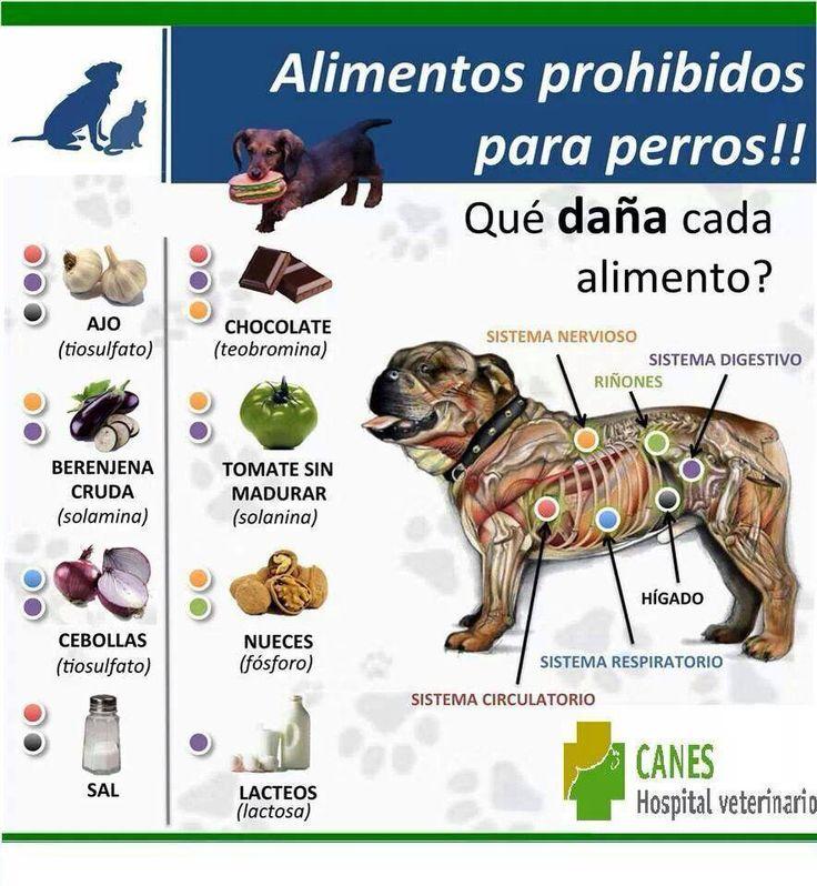MUY IMPORTANTE: infografía con los alimentos prohibidos para perros.
