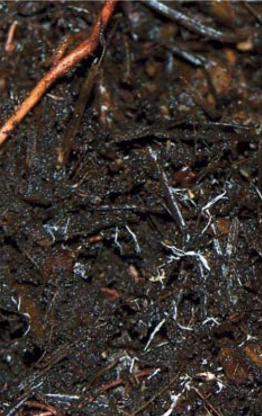 Mycorrhizal Fungi -  Click Here for  Info: http://puyallup.wsu.edu/~linda%20chalker-scott/horticultural%20myths_files/Myths/Mycorrhizae.pdf