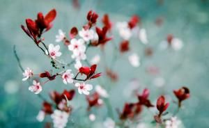 spring  lovely flower nature green cute beautiful photo pink flowers