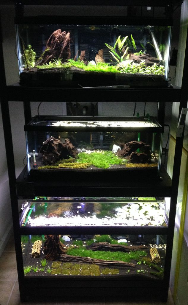 68 best images about aquarium envy on pinterest lush for Racks fish house