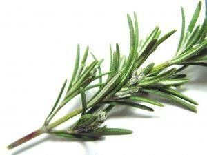 Rosemary natural cat repellent--eight rosemary tea bags for every one quart of water.