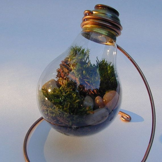 Ideas for creativity - Terrarium in the bulb or bowl (15 pictures). More: http://wonderdump.com/ideas-for-creativity-terrarium-in-the-bulb-or-bowl-15-pictures/