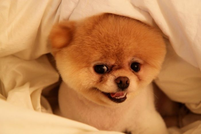 I don't know about you but if Boo isn't cute this world should just stop!