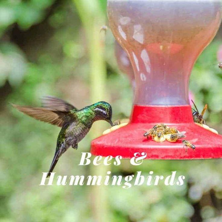 Hummingbird Feeders5 Easy Ways to Keep Bees Away