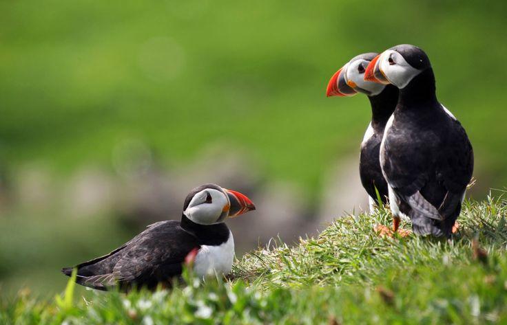 Estate di natura e cultura alle Isole Faroe - http://www.chizzocute.it/estate-natura-cultura-isole-faroe/