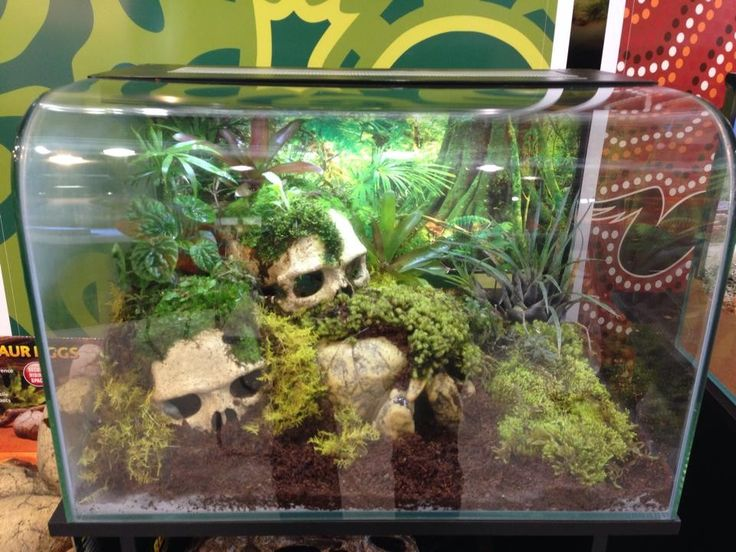 snake vivarium jungle skulls