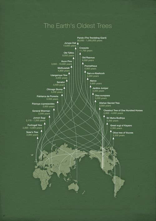 An Infographic on the Earth's oldest trees. Very simple and clean design. The organization of arrows creates nice movement within the graphic, guiding the viewer's eye upwards showcasing the growth of the trees from youngest to oldest. A better connection of where these trees are located in the world could be made. -KR