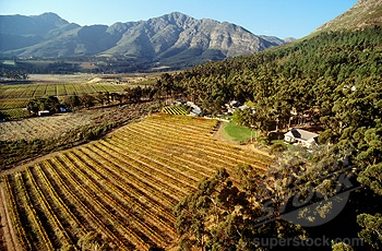 Le Petite Ferme Wine Estate, Franschhoek, Western Cape, South Africa - great restaurant! Want to go!