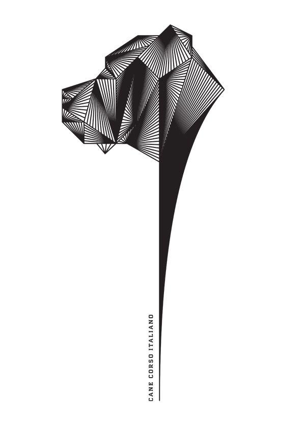 cane corso  illustration, graphic