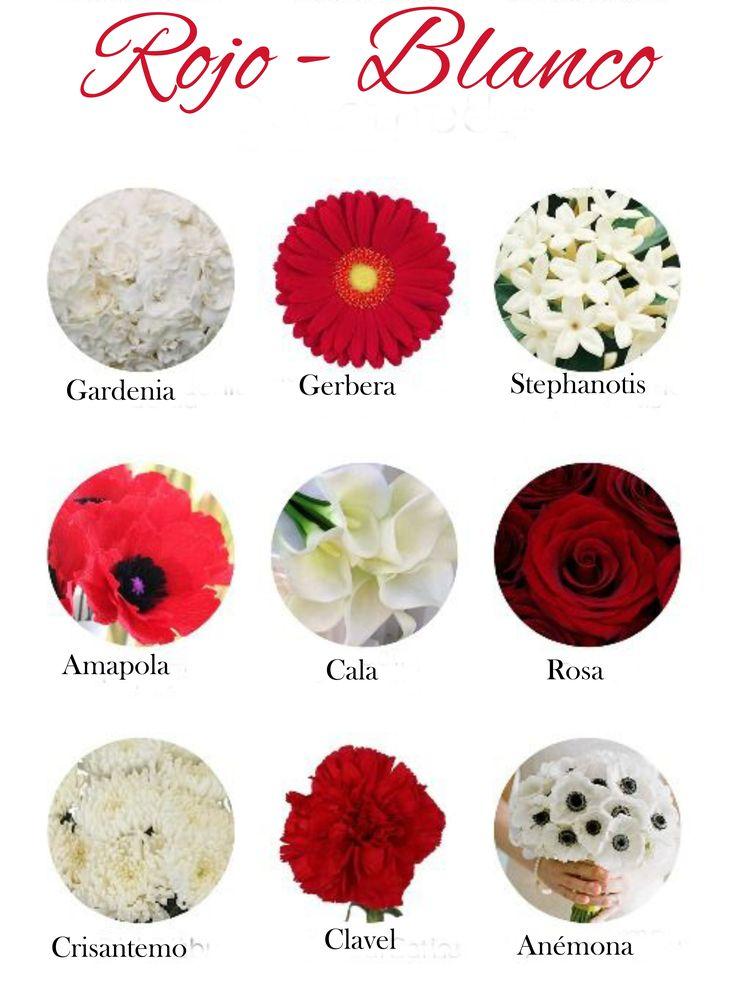 Flores de color rojo y blanco red flowers and white - Clase de flores y sus nombres ...
