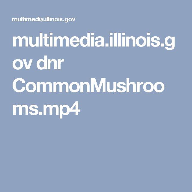 multimedia.illinois.gov dnr CommonMushrooms.mp4
