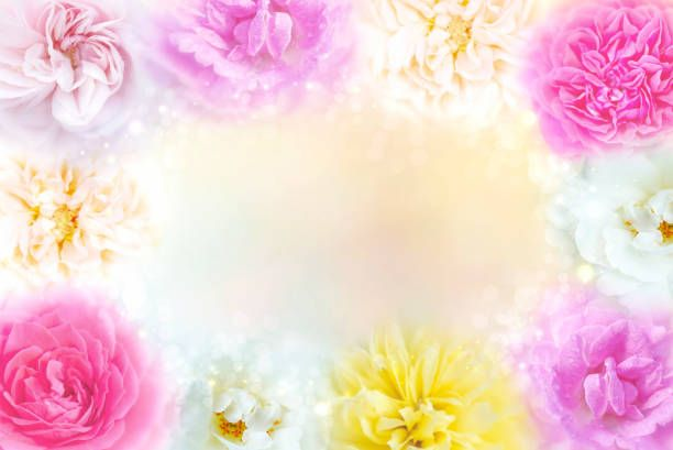 multicolored roses flower frame with copy space romantic background