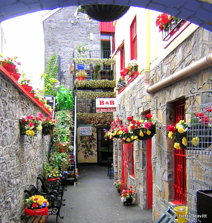 723 best images about storefront flowers gardens on for Garden design galway