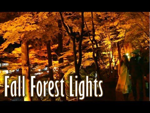日本の秋 A Forest on Fire~Breathtaking Autumn Light Display 香嵐渓、絶景です。(紅葉・日本 Japan) - YouTube