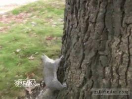 Drunk Squirrel Tries to Climb Tree