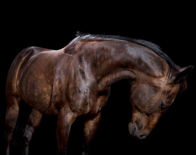 HDR Horses by Andrew McGibbon