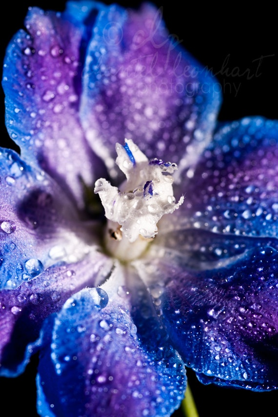 308 Best Blue And Purple Images On Pinterest Flowers Colors